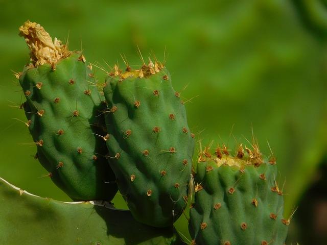 Cactus, Green, Colors, Gran Canaria, Canary