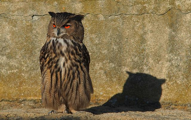 Owls, Grand Duke, Nature, Raptor