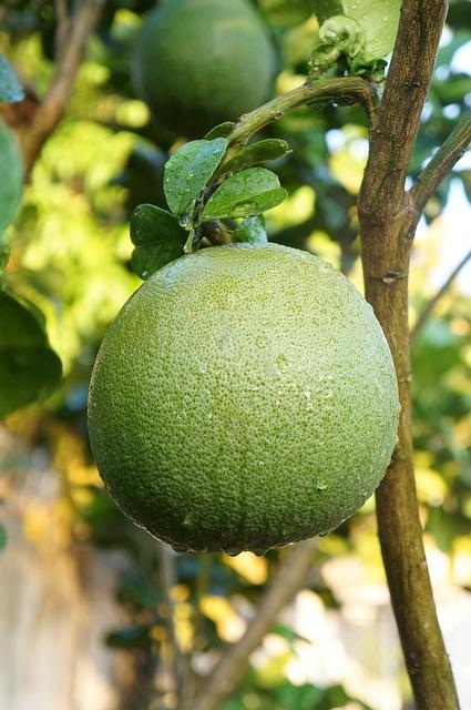 Grapefruit, Green Skin Pomelo Grapefruit, Fruits