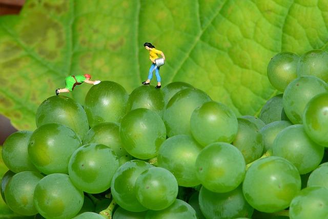 Grapes, Small World, Green Grapes, Mini People