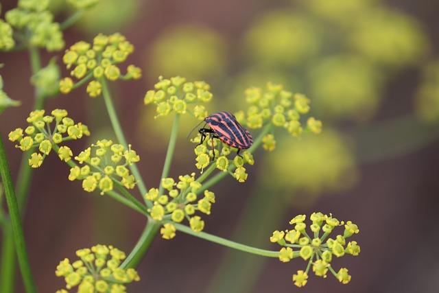 Strip Bug, Graphosoma Lineatum, Bug, Red, Black, Nature