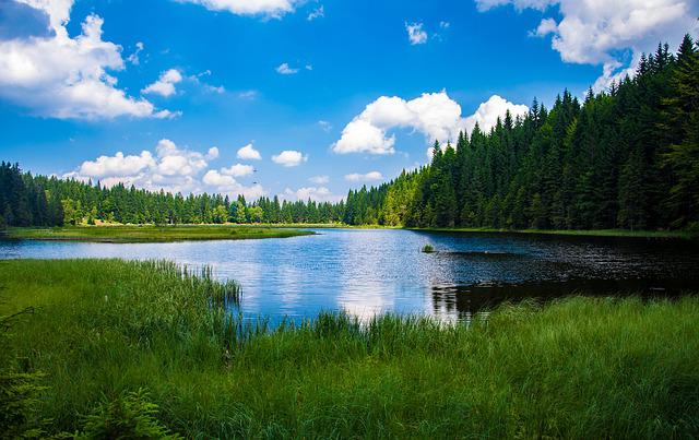 Bavarian Forest, Alpsee, Lake, Clouds, Grass, Trees