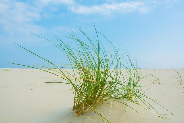 Grass, Borkum, Beach