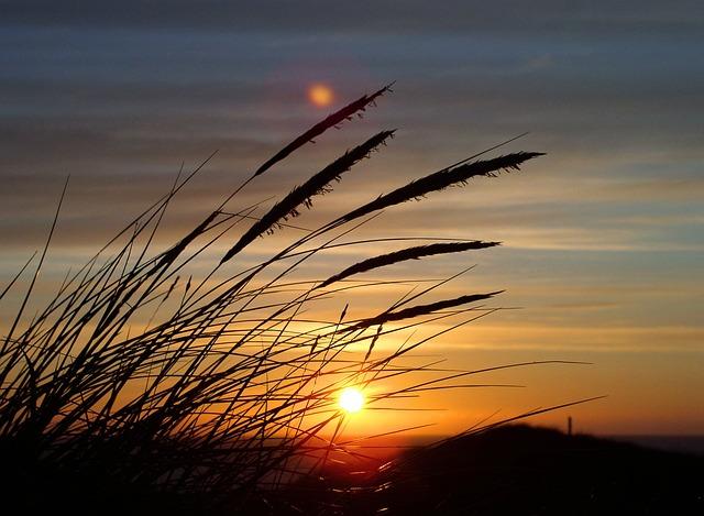 Sun, Grass, Dune, Denmark, North Sea