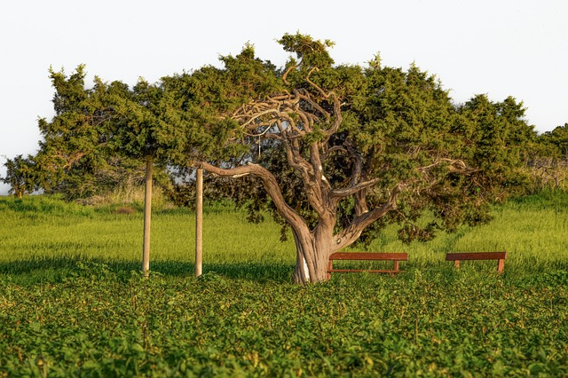Tree, Nature, Grass, Landscape, Countryside, Field