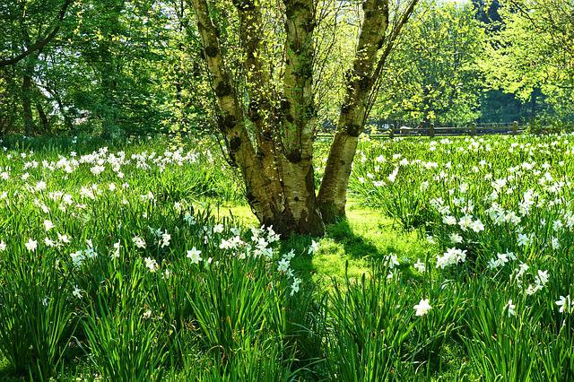 Field, Grass, Flower, Tree, Green Daffodil