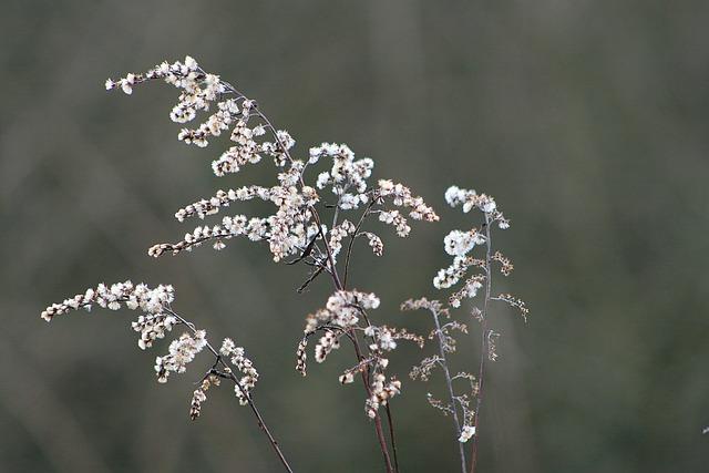 Nature, Flower, Plant, Winter, Grass