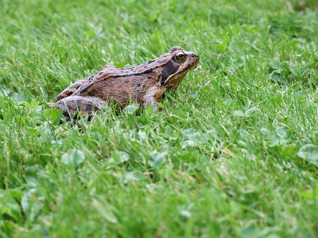 Frog, Grass, Summer, Meadow, Lawn, Garden, Water, Pond