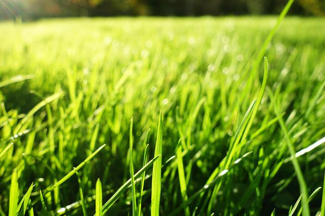 Grass, Grass Blades, Lawn, Bokeh, Growth