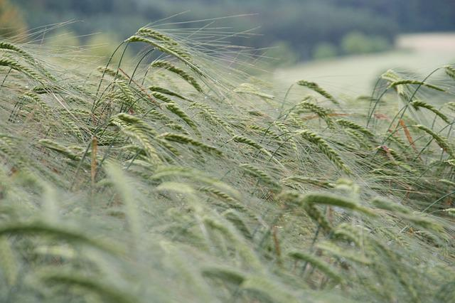Nature, Plant, Grass, Background, Agriculture, Harvest