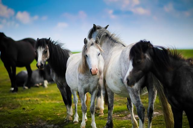 Animals, Equine, Farm, Field, Grass, Horse, Livestock