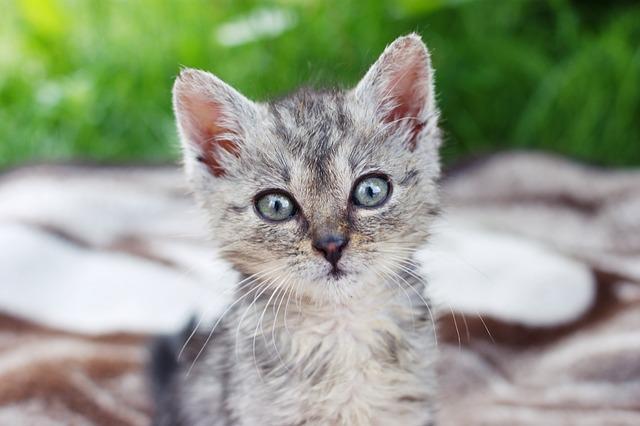 Dart, Kitten, A Member Of The Family, Grass