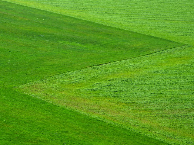 Meadow, Green, Grass, Landscape, Square, Symmetrical
