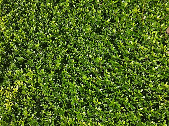 Satsuki, Grass, Leaf, Green, Flower Bed, Bill, Valley