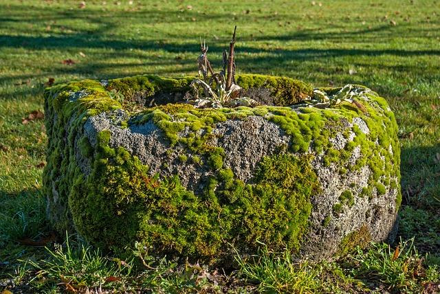 Lichen, Moss, Stone, Grass, Nature, Plant, Outdoor