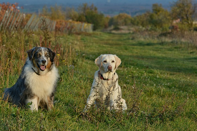 Dog, Mammal, Grass