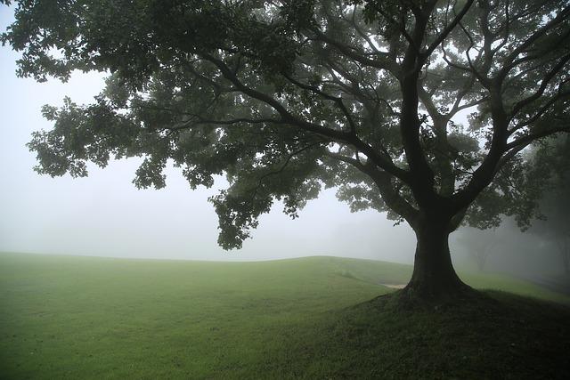 Tree, Grass, Fog, Field, Meadow, Grassy Field