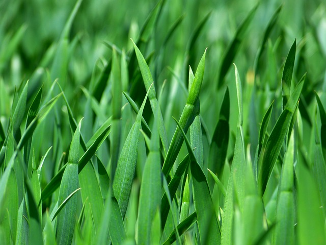 Grass, Blades Of Grass, Nature, Meadow, Close Up, Green