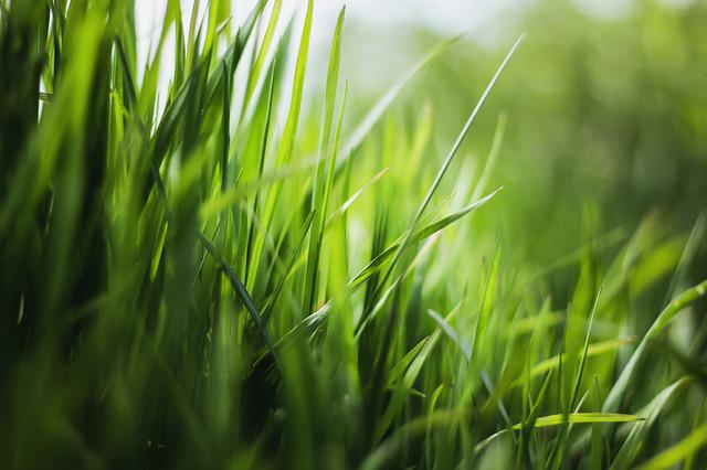 Grass, Nature, Green, Blades Of Grass, Meadow, Plant
