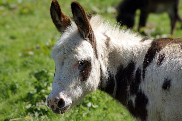 Mammal, Animal, Grass, Nature, Farm, Wildlife Donkey