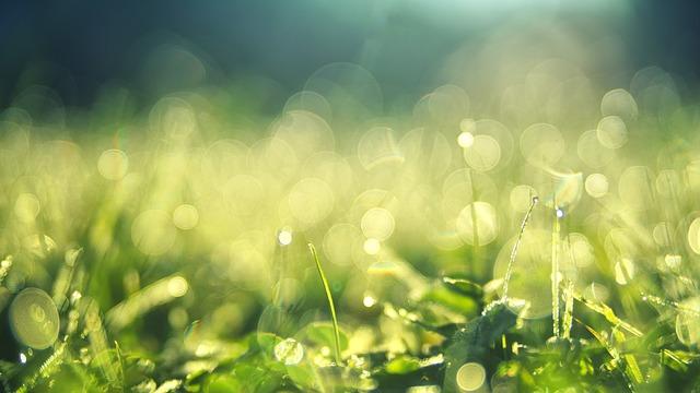 Grass, Morning Dew, Bokeh, Green, Meadow, Nature