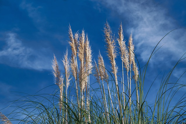 Reed, Nature, Plant, Grass, Rest, Mood, Sky, Clouds