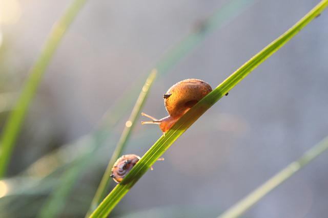Snails, Early In The Morning, Grass, Sunshine, Nature