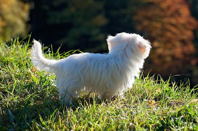 Dog, Puppy, White, Out, Meadow, Grass, Nature, Baby Dog