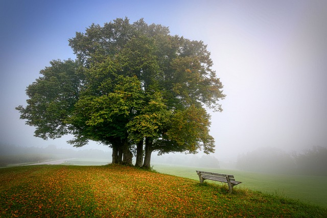 Landscape, Tree, Bench, Park, Meadow, Pasture, Grass