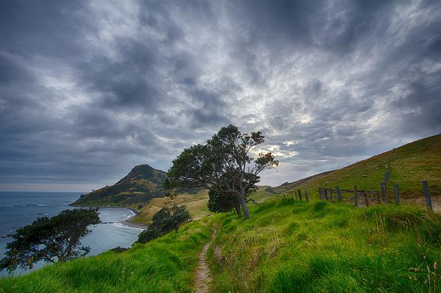 Trees, Coast, Path, Trail, Grass, Pasture, Meadow
