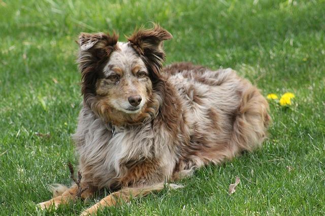 Dog, Grass, Animal, Canine, Pet, Rusty