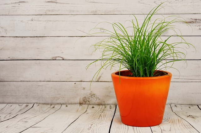 Flowerpot, Grass, Plant, Ceramic Pot