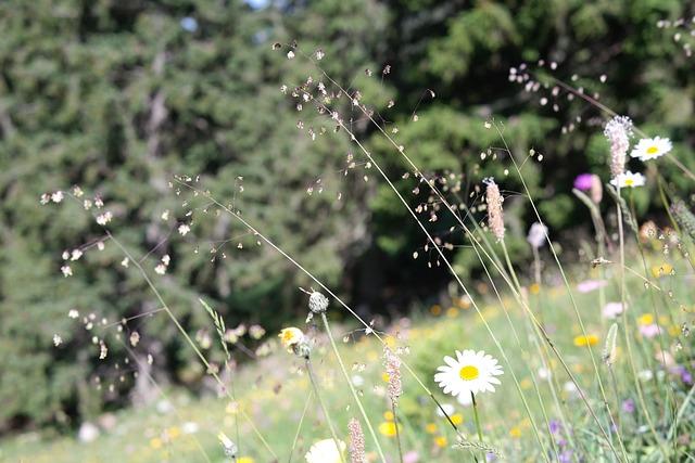 Quaking Grass, Briza Media, Grass, Ordinary, Licorice
