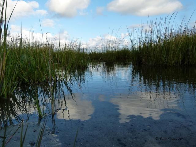 Water, Marsh, Grass, Weeds, Saltwater, Nature, Bog