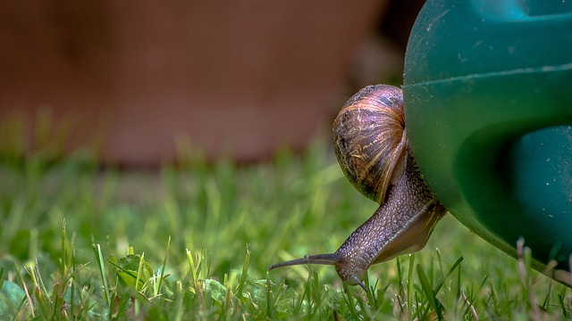 Snail, Watering Can, Grass, Nature, Shell, Summer