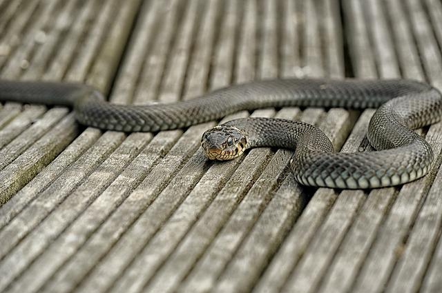Snake, Nature, Reptile, Animal World, Grass Snake