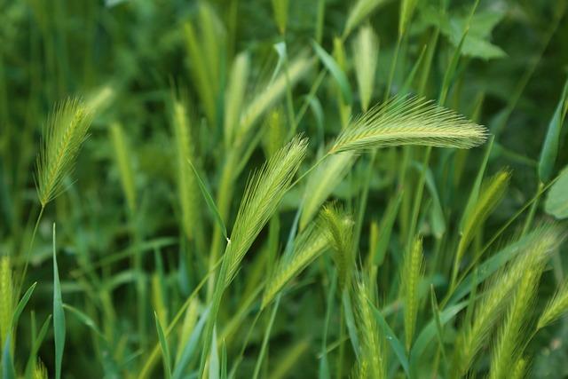 Nature, Chan, Plant, Grass, Garden, Spring, Green