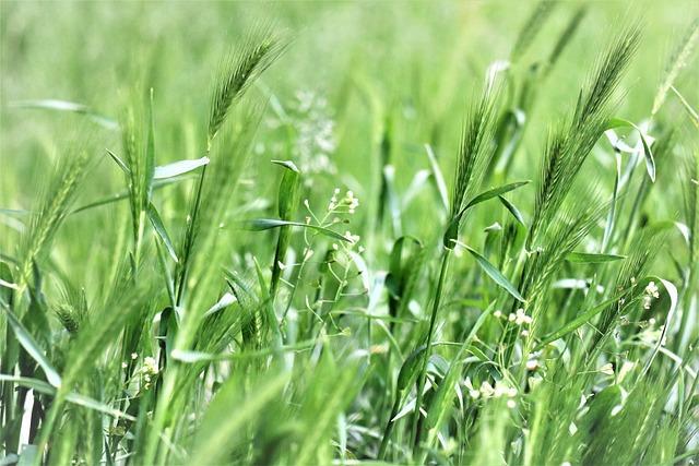 Meadow, Grass, Green, Figure, Spring, Landscape, Mood