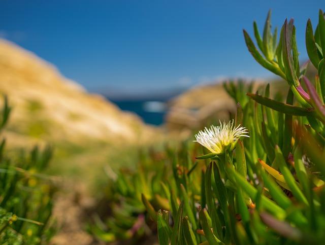 Nature, Grass, Summer, Plant, Corsica, Sardinia