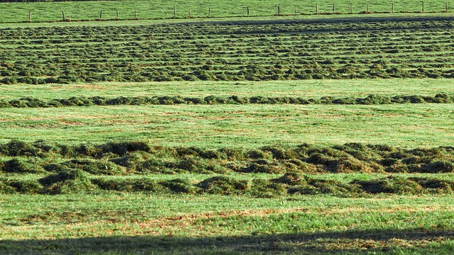 Grass, Pile, Agriculture, Summer, Hay, Feed, Food