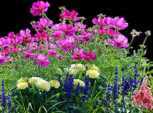 Flower Meadow, Meadow, Nature, Flowers, Grass, Summer
