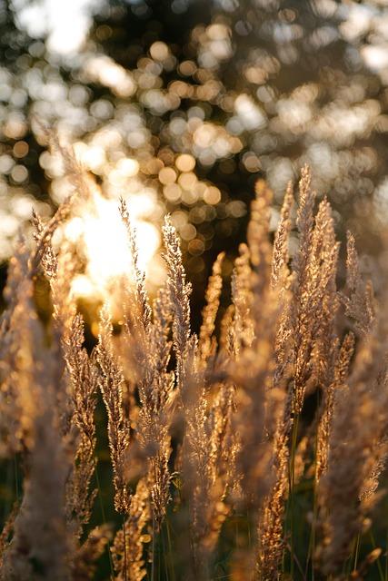 Grasses, Meadow, Grass, Evening, Morning, Sun, Summer
