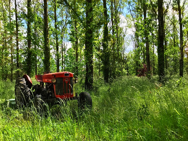 Tractor, Grass, Tree