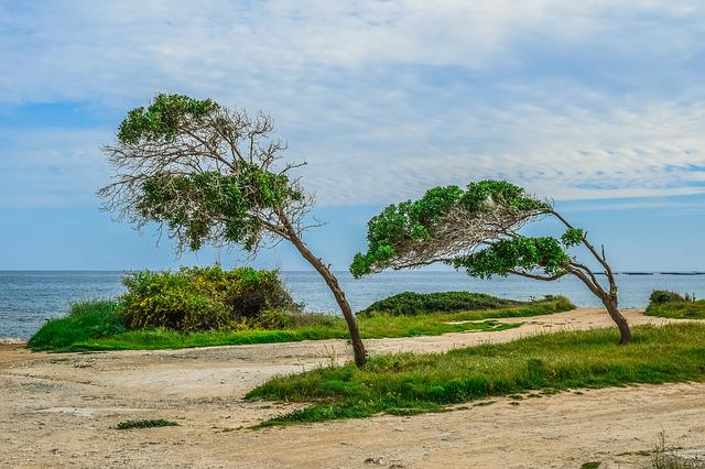 Nature, Landscape, Trees, Sky, Seashore, Grass