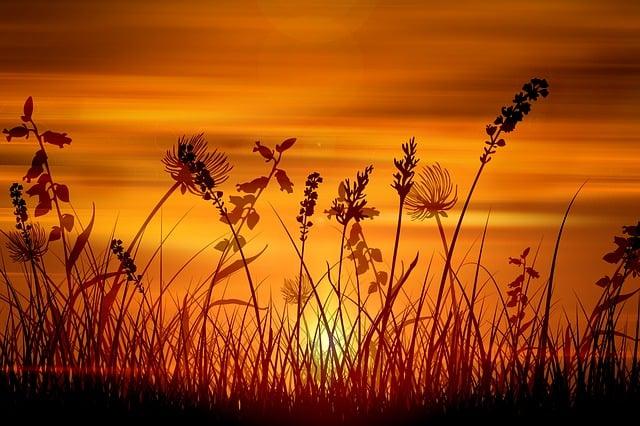 Wallpaper, Sunset, Grass, Halme, Sun, Background