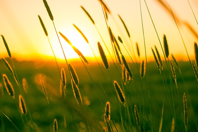 Summer, Dusk, Twilight, Grasses, Atmosphere, Scenic