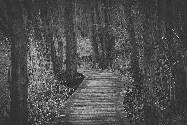 Tree, Meinweg, Gloomy, Peaceful, Go, Grasses, Wood