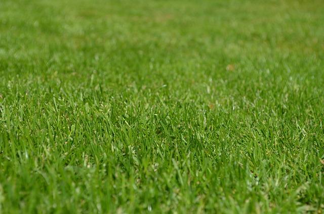 Grasses, Lawn, Garden, Ornamental Grasses, Greenery