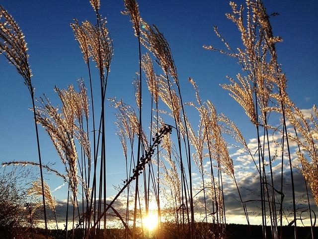 Grasses, Mood, Nature, Sun, Back Light, Meadow