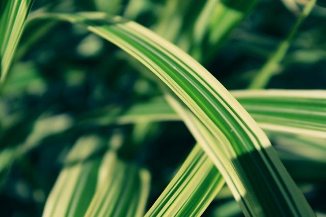 Blade Of Grass, Halm, Grasses, Nature, Green, Garden
